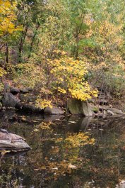 North Woods_Ravine-16